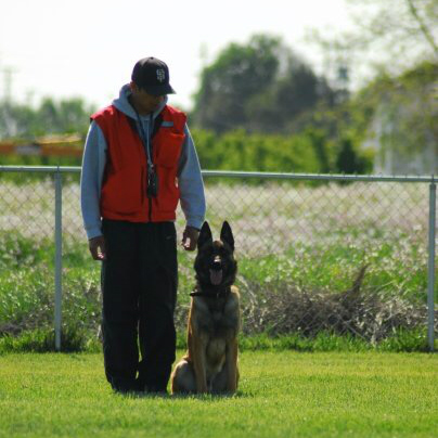 Tri-Valley K9 Services Police Dog Training and Boarding Guard Dog Training Command